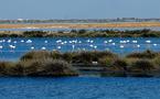 La iniciativa PLANET experimentará en Doñana la aplicación de aviones no tripulados a la monitorizacion y vigilancia ambiental